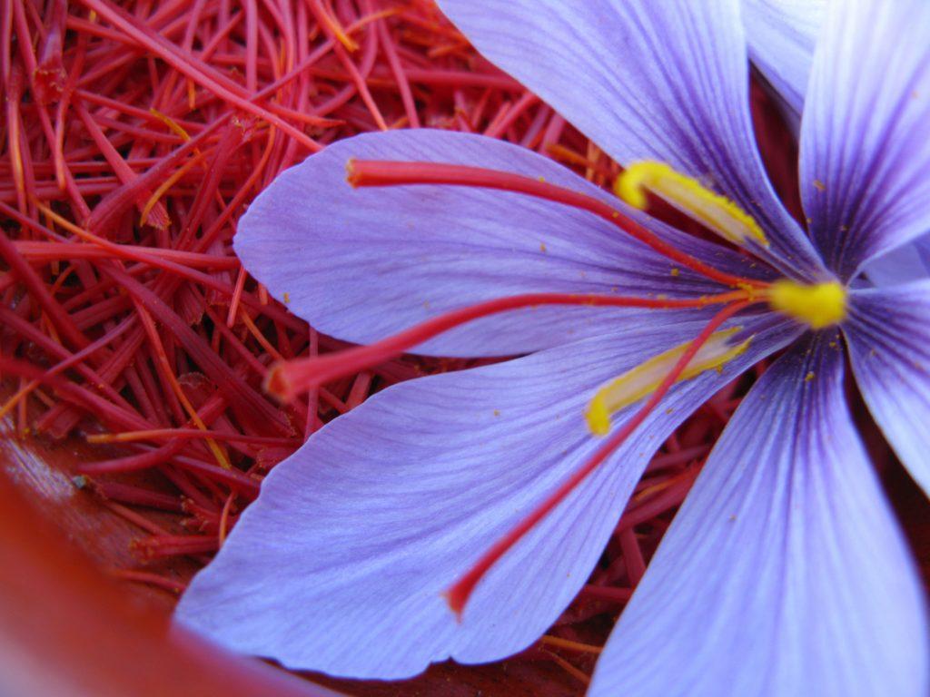 dac-diem-cua-saffron-nhuy-hoa-nghe-tay