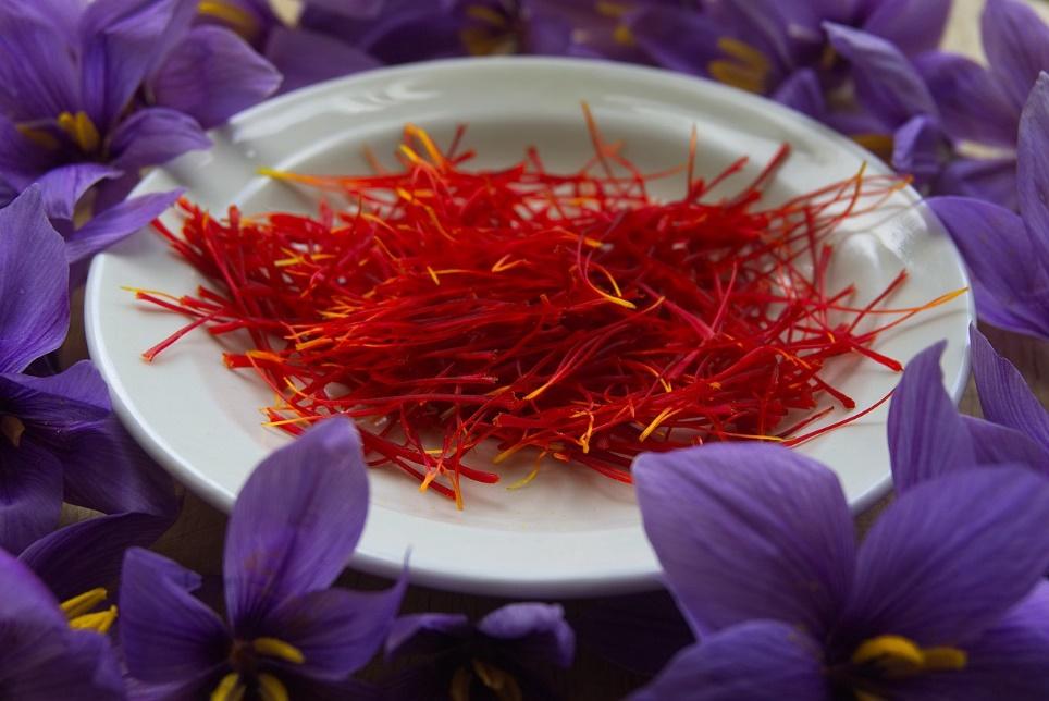 nguon-goc-ten-saffron-nhuy-hoa-nghe-tay
